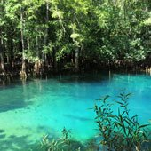 The clear blue water at Manatee Springs is surrounded by lush vegetation.