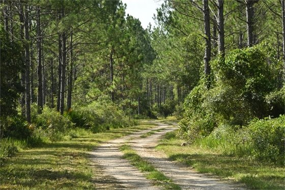 Dirt trail winding through tall trees