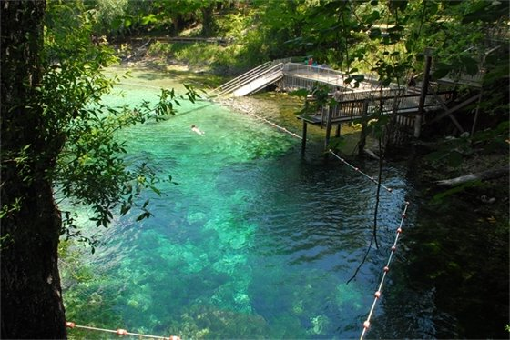 Clear, blue spring on the Suwannee River with a person swimming in it.