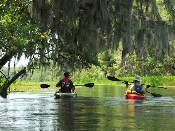 Kayakers paddling on a river under a tree